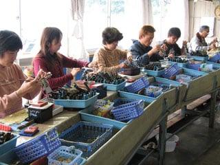 Elevage de perles Akoya au Japon