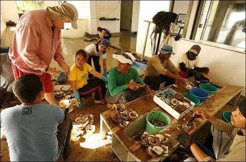 Inspection des huitres perlières