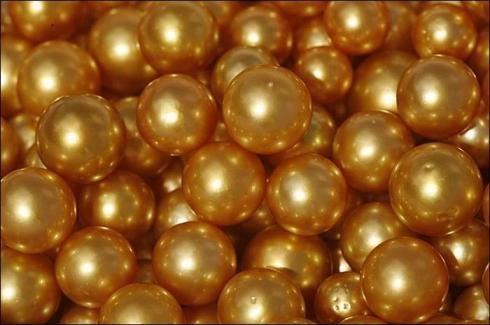 Coquilles d'huitres de perles d'Australie