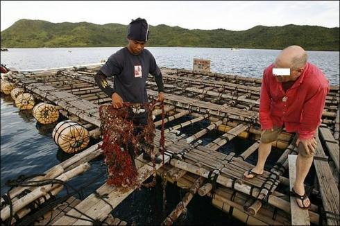 Inspection des radeaux où sont fixés les perles d'Australie