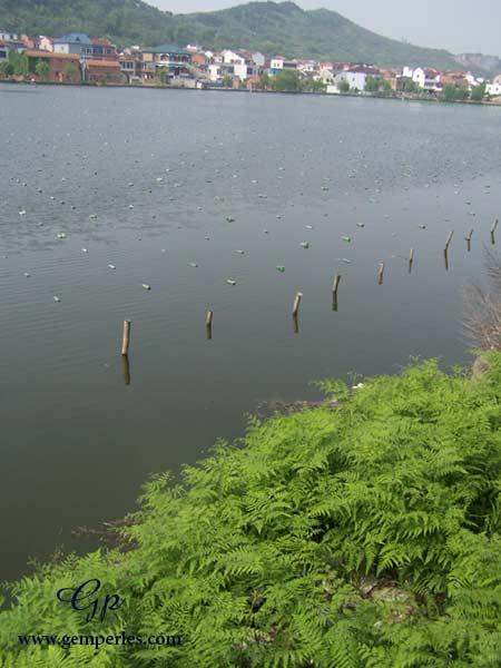 Lac perlier appartenant à l'une de nos fermes partenaires