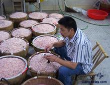 Inspection de l'arrivage des perles au sein de l'une de nos fermes partenaires