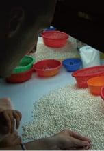 Ouvrière specialisée en train de trier des perles de culture d'eau douce