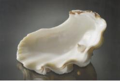 Formation d'une perle blister au sein d'un coquillage