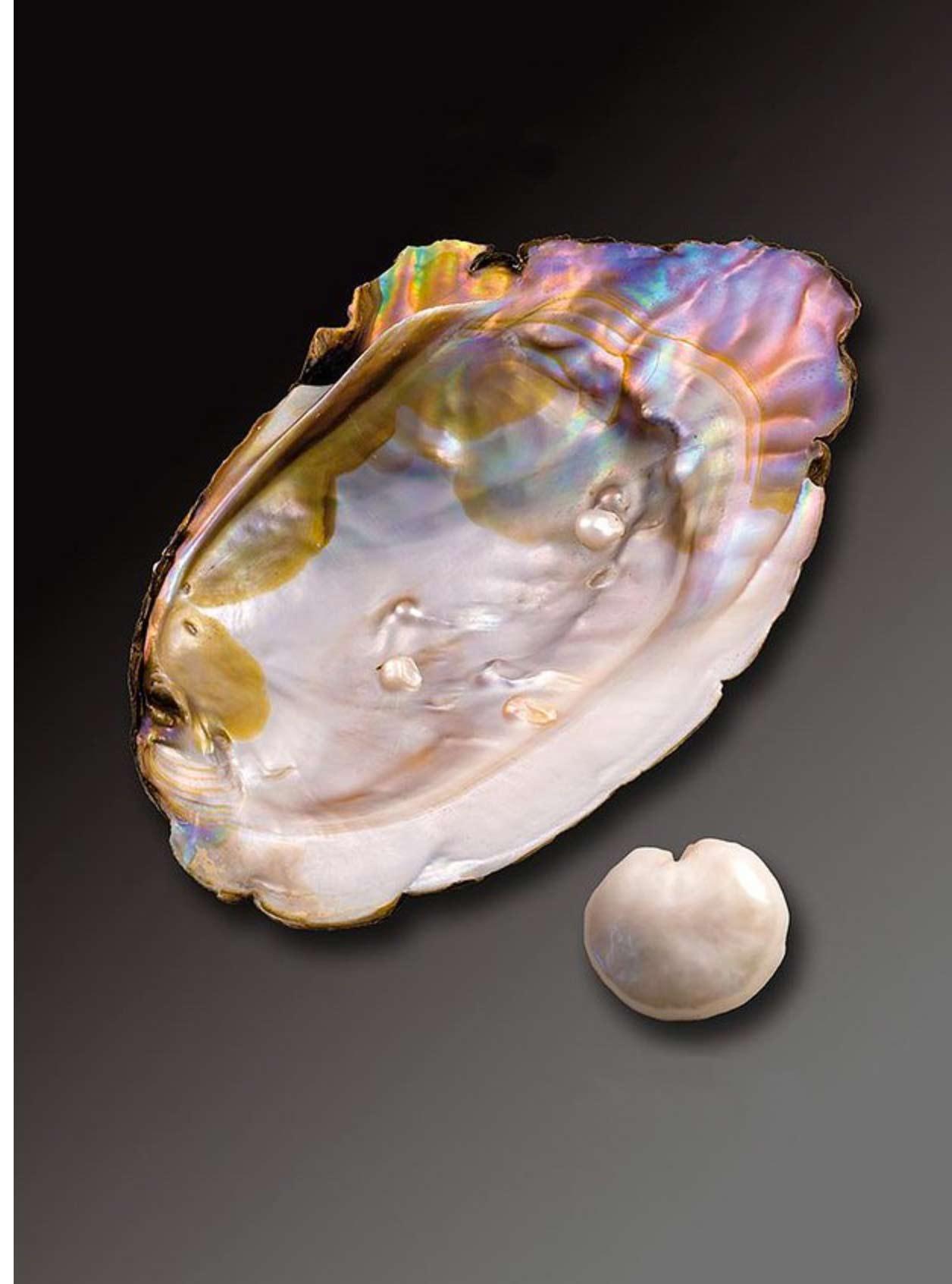 Moule d'eau douce et sa perle naturelle