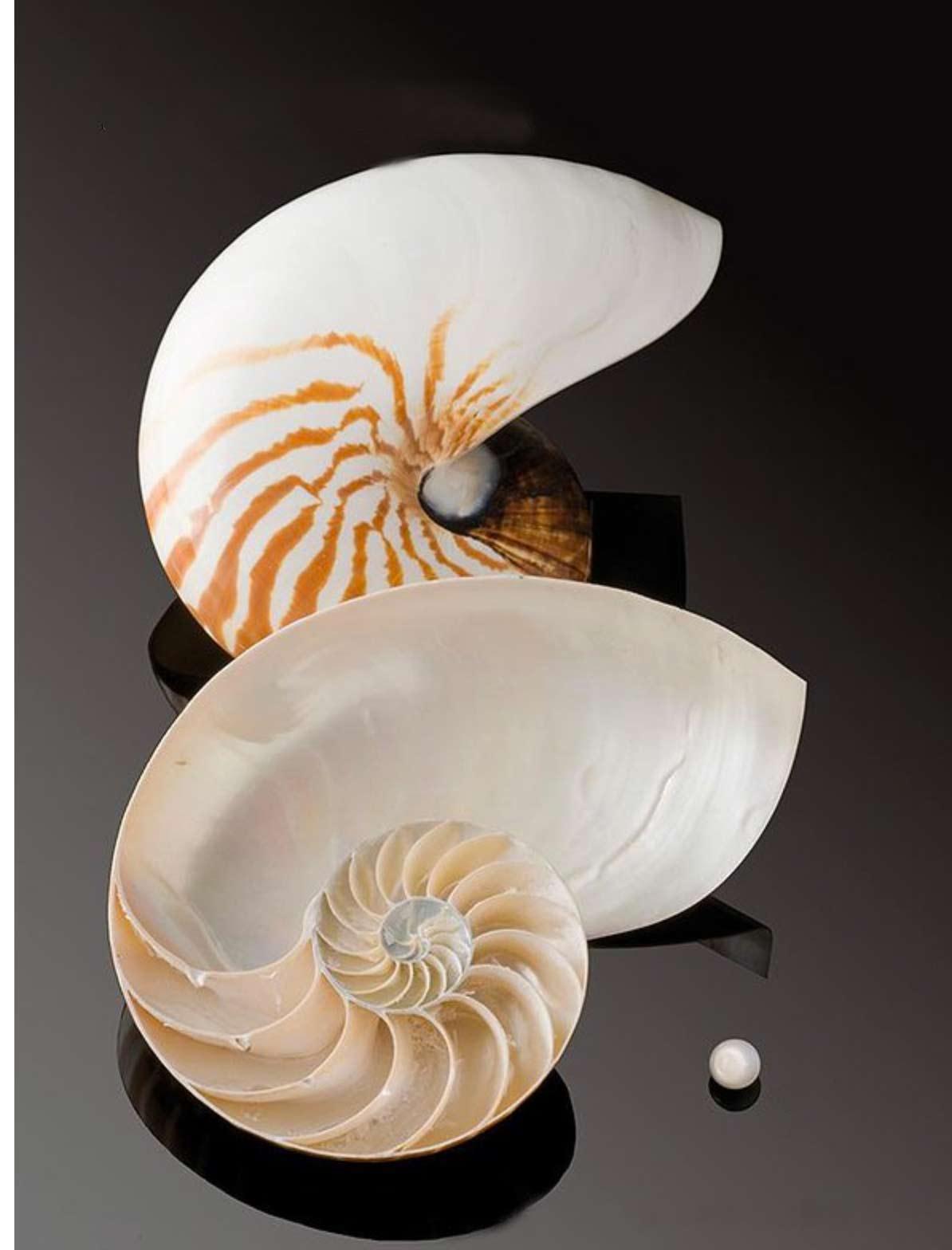 Perle de nautile et son mollusque de type céphalopode