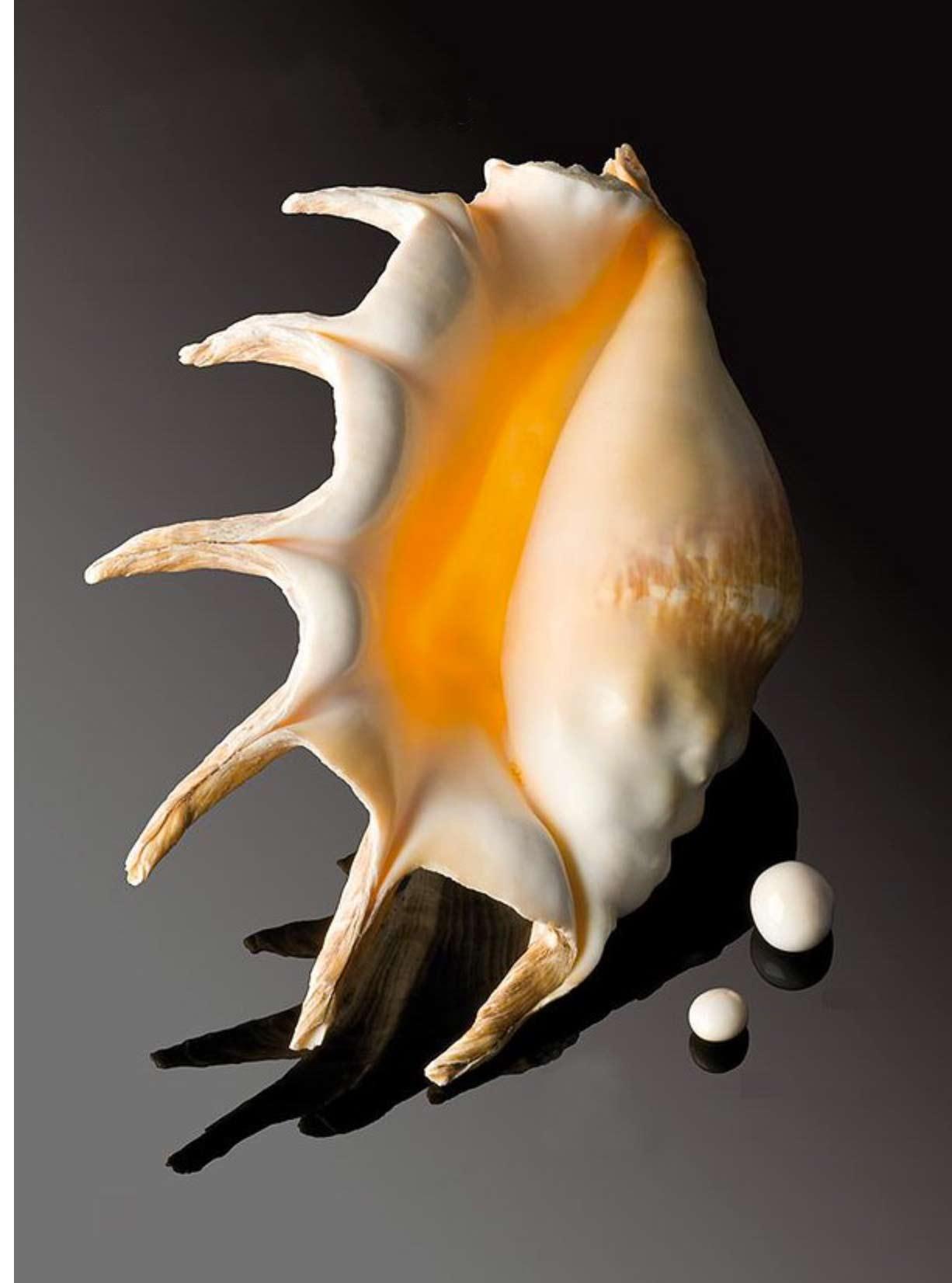 Perle de ptérocère et son mollusque, le Lambis truncata