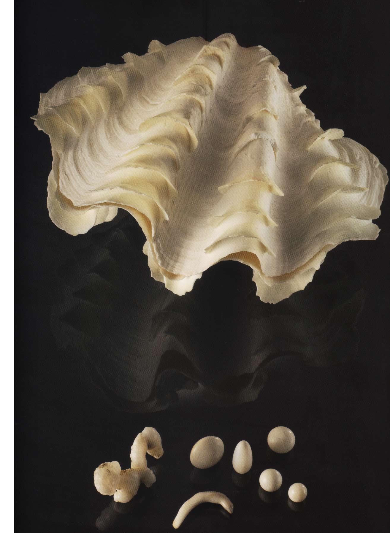 Perles de tridacne et son mollusque, le tridacna gigas