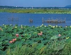 Lac Kasumigaura
