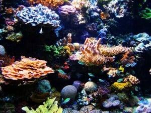 Corail au fond d'un océan