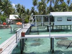 Ferme perlière en Polynésie Française
