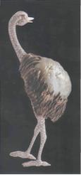 Perle baroque formant le corps d'une autruche