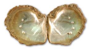 Perles dans leur coquille