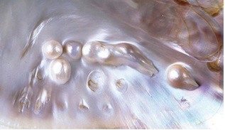 Perles nacrées collées à la coquille