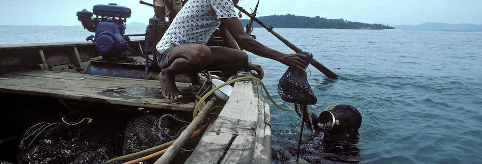Pesca delle ostriche dei mari del sud - Polinesia