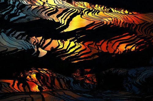 Rizière du Yunnan